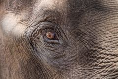 Eye of an elephant. Close up stock photography