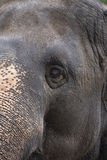 Eye elephant Royalty Free Stock Images
