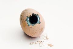 Eye en el huevo Imagenes de archivo