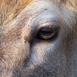 An eye equine. Particular of an eye equine royalty free stock photo