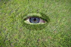 Eye in erba Fotografia Stock