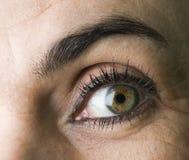 Eye and eyebrow Royalty Free Stock Photography