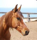 Eye and eyelash horses royalty free stock image