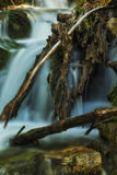 The Eye in the Falls. Slow motion waterfall running over moss in the Wasatch national forest in Utah USA  look in between the logs there is  a eye looking right Royalty Free Stock Photos