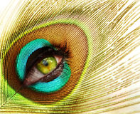 Eye and feather Stock Photo