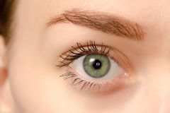 Eye female green macro. Medicine health background Royalty Free Stock Image