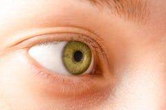 Eye female green natural macro Royalty Free Stock Image