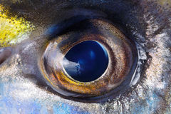 Closeup of fish eye, background Royalty Free Stock Image
