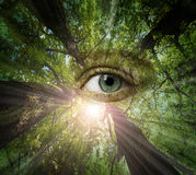 Eye of forest stock image