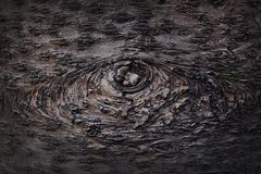 Eyes appear on tree skin stock photography