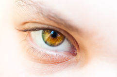 Eye of a girl. Eye closeup with white background stock photos