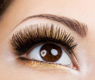 Eye glamour make-up Royalty Free Stock Images