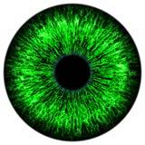 eye green Royaltyfri Bild
