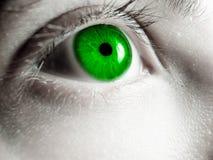eye green Arkivfoton