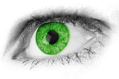 Eye, Green, Eyebrow, Close Up stock photography