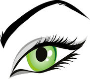 Eye, Green Eyes, Iris, Eyelid Stock Image