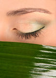 Eye and green leaf Royalty Free Stock Image