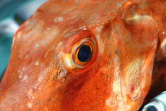 Eye of a Gurnard on a pewter dish Royalty Free Stock Images