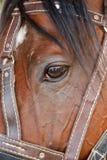 Eye of  horse Stock Photo