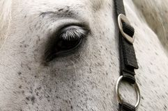 Eye of  horse. Royalty Free Stock Photo