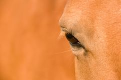 Eye of  the horse. Stock Photo