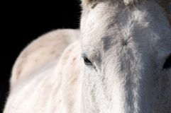 Eye of the horse. Royalty Free Stock Images