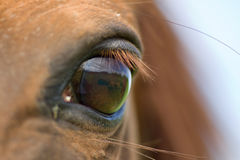 Eye of horse Royalty Free Stock Images