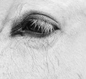 Eye of a horse. Close up Stock Images