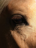 The eye of a horse. The eye of a chestnut coloured horse Royalty Free Stock Images