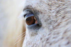 Eye of horse Stock Photos