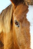 Eye horse Royalty Free Stock Photos