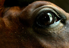 The eye of the horse Royalty Free Stock Photography