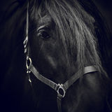 Eye of a horse. Royalty Free Stock Photos