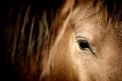 Eye horse Stock Photo