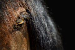 Eye of horse Royalty Free Stock Photos