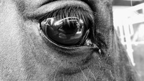 Eye of the horse stock photo