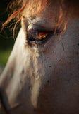 Eye of horse. Sad sight horse on nature Stock Photo