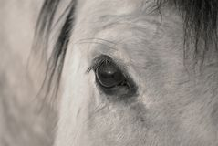 The Eye of a Horse Royalty Free Stock Images