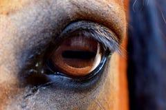 Eye of Horse Royalty Free Stock Photos