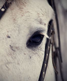 Eye of a horse. Royalty Free Stock Photo