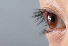 eye humanen Royaltyfria Foton