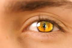 Eye II. A close  up of a brown human eye Royalty Free Stock Images