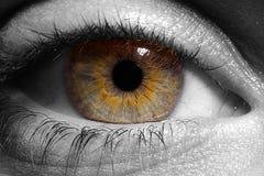 Eye il primo piano (B&W) Fotografia Stock