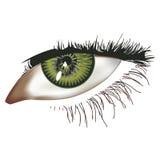 Eye illustration. Illustration of a female right eye including lashes Royalty Free Illustration