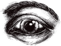 Eye illustration royalty free illustration