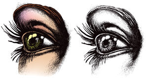 Eye illustration. A detailed illustration of a human eye Stock Photo