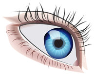 Eye Illustration Royalty Free Stock Photos