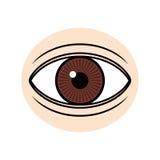 Eye illustration. Brown eye on light skin illustration Stock Photos