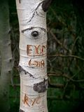 Eye on initials. Letters carved in tree bark, with a knot resembling an astonished eye staring down at them Stock Images