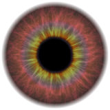 Eye Iris Stock Image